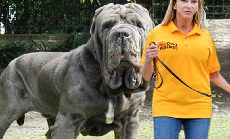 Редчайшие породы собак в мире