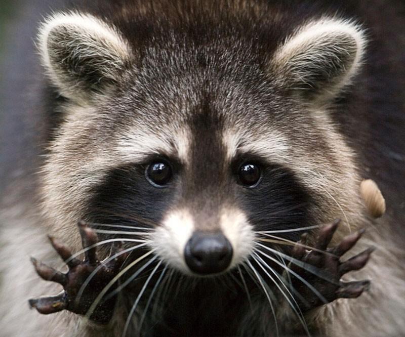 Милые, но опасные животные
