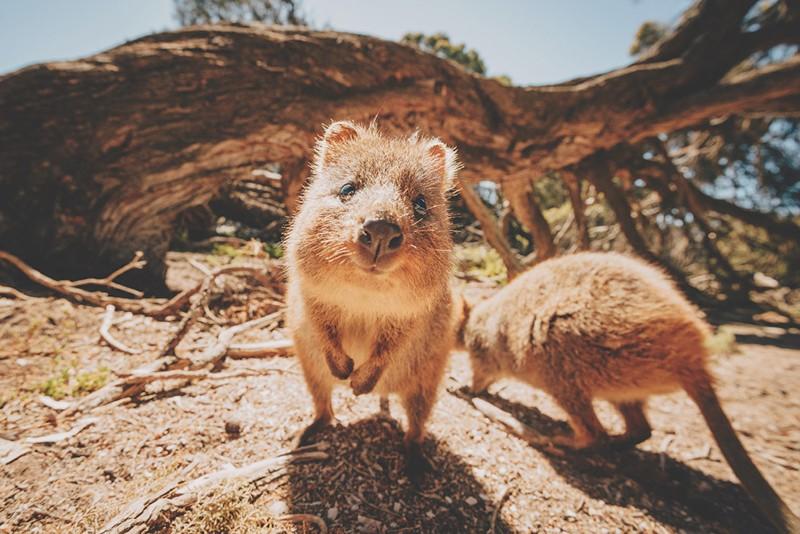 Эти удивительные животные