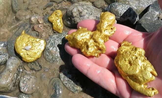 Сколько золота можно добыть за день