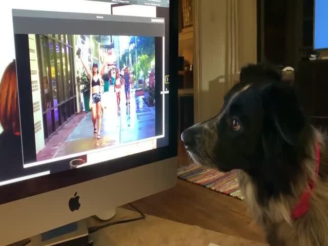Пес, который «лайкает» фотографии со своим хозяином