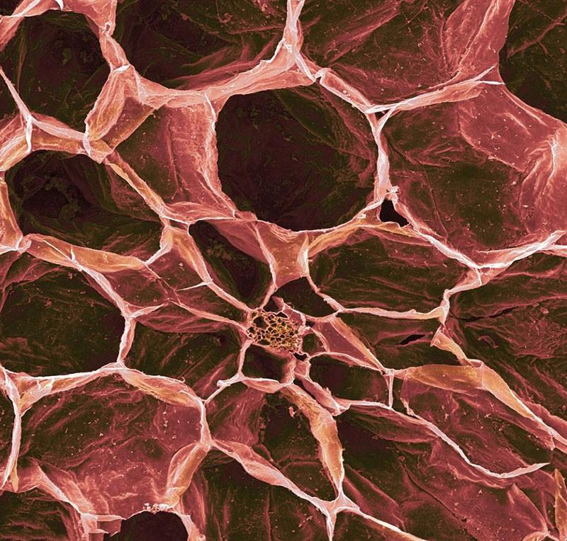 Популярные продукты под микроскопом